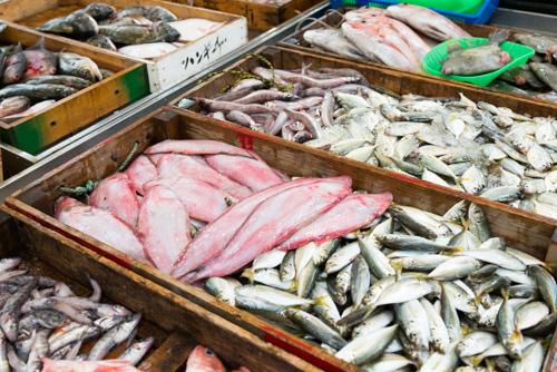 鮮魚市場コーナー