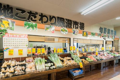 旬野菜コーナー
